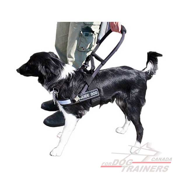 canadian guide dog for the blind trainers