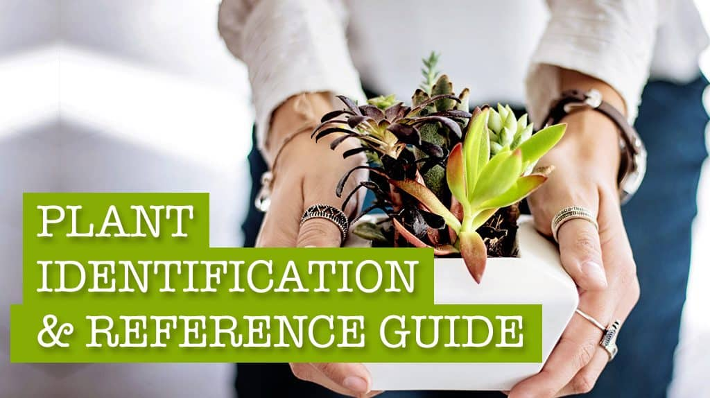 perennial plant identification guide uk
