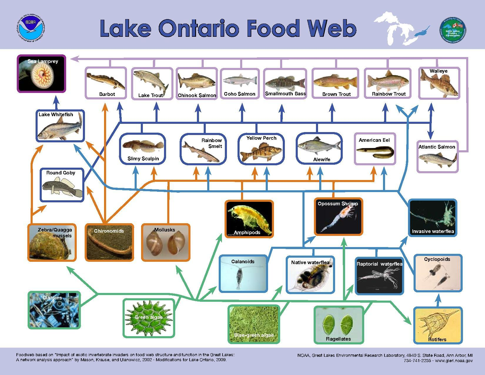food guide for children ontario
